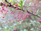 林後四林平地森林園區:DSCF8504.JPG