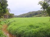 南仁湖步道:DSCF8407.JPG