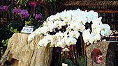2011台灣國際蘭花展:DSC00973.JPG