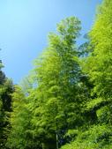 忘憂森林及小半天:DSC02418.JPG