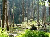 忘憂森林及小半天:DSC02441.JPG