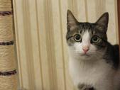 寵物:DSCF0059.JPG