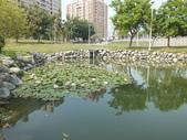 鼎金滯洪池:DSCF0606.JPG