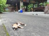 馬太鞍濕地生態園區:2020-05-27 11.49.23.jpg