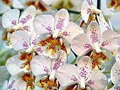 2011台灣國際蘭花展:DSC01012.JPG