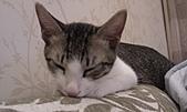 寵物:IMAG0056.jpg