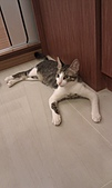 寵物:IMAG0047.jpg
