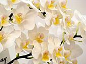 2011台灣國際蘭花展:DSC01016.JPG