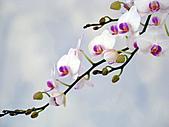 2011台灣國際蘭花展:DSC01017.JPG