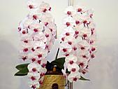 2011台灣國際蘭花展:DSC01018.JPG