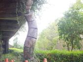 林後四林平地森林園區:DSCF8488.JPG