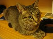 寵物:DSC08675.JPG