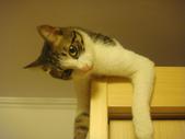 寵物:DSC08681.JPG