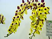 2011台灣國際蘭花展:DSC01022.JPG