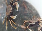 東石漁人碼頭:DSCF6336.JPG