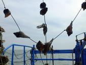 東石漁人碼頭:DSCF6335.JPG