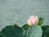 新營天鵝湖&小半天:DSC02226.JPG