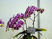 2011台灣國際蘭花展:DSC00996.JPG