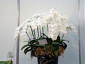 2011台灣國際蘭花展:DSC01005.JPG