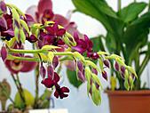 2011台灣國際蘭花展:DSC01027.JPG
