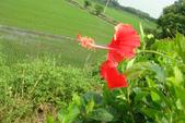 小南海自然生態公園:DSC03712.JPG
