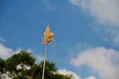 新山。夢湖:IMG_0302.jpg