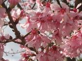 武陵農場:1450225314.jpg