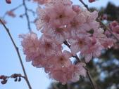 武陵農場:1450225219.jpg