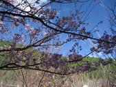 武陵農場:1450225220.jpg