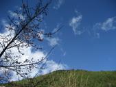 武陵農場:1450225224.jpg
