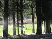 武陵農場:1450225234.jpg