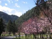 武陵農場:1450225236.jpg