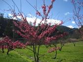 武陵農場:1450225241.jpg