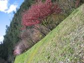 武陵農場:1450225245.jpg