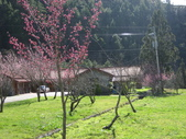 武陵農場:1450225247.jpg
