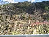 武陵農場:1450225249.jpg