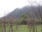 武陵農場:1450225158.jpg