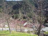 武陵農場:1450225164.jpg