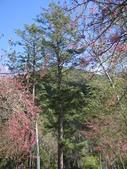 武陵農場:1450225273.jpg