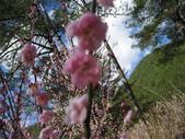 武陵農場:1450225185.jpg