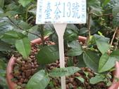 武陵農場:1450225286.jpg