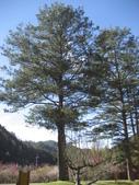武陵農場:1450225190.jpg