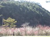 武陵農場:1450225191.jpg