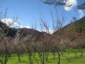 武陵農場:1450225198.jpg