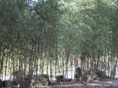 武陵農場:1450225207.jpg