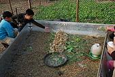 2009.12.26嘉義市花海節:DSC_0146.JPG