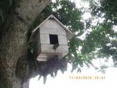 真假小鳥屋:IMGP2045.JPG