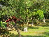 嘉義公園:IMGP1962.JPG