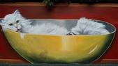 青埔社區貓世界:IMAG0333.jpg