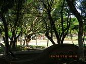 嘉義公園:IMGP1926.JPG